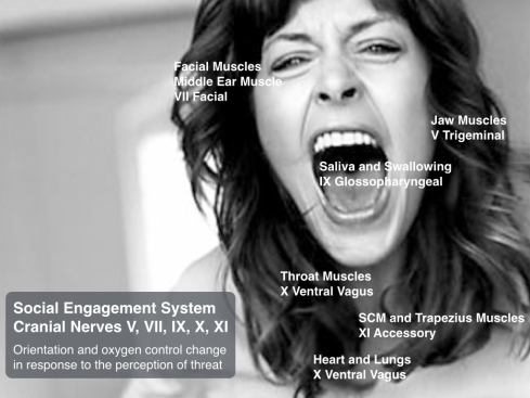 Social Engagement Cranial Nerves v1