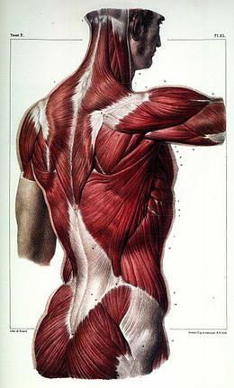 lumbothoracicfascia